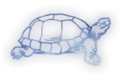 Tortoise Constellation Icon