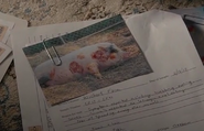 204 - Infected pig investigated by Phyllis Stanton