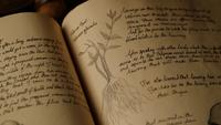 314-Valerian root book