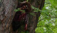 303 body on tree