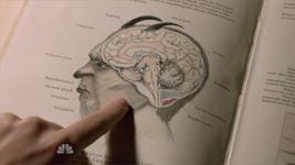 217 Ziegevolk Brain