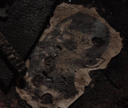 421-Remains of a Hundjäger excerpt