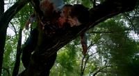303-Dead in tree