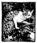 Fuchs und Katze Arthur Rackham 1909