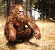 Bigfoot skullc