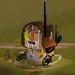 Adventurer's Roadhouse