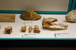Museo di preistoria e protostoria della Valle del Fiora Manciano 2