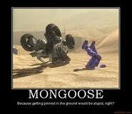 Incidente mongoose