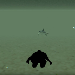 A shark sighting.