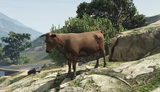 Krowa (V)