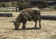 Cow-GTAV-idle