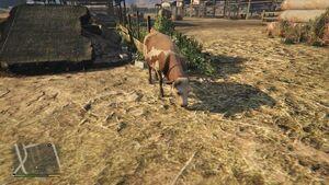 Cow Farm-3