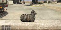 Nunca-assuste-um-gato-em-gta-v-1024x500
