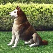 Husky (V)