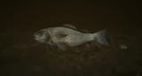 Ryba (V)