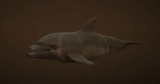 Delfin (V)