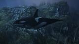 Orka (V)