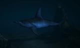 Rekin Młot (V)