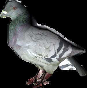 Pigeon IV
