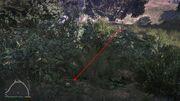Peyote Plants GTAVe 16 Galileo Tunnel View