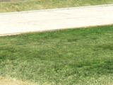 Felon GT