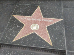 TheGurningChimpsWOF GTAV