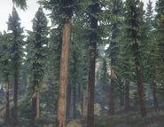 Sequoia-GTAV-SS1
