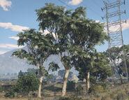 EucalyptusTree-GTAV-SS2