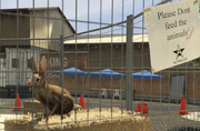 Director Mode Actors GTAVpc Animals Rabbit