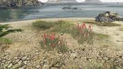 PeyotePlants-GTAO-Location64