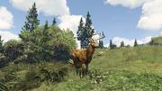 Peyote Plants Animals GTAVe Deer