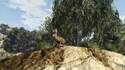 Peyote Plants Animals GTAVe Rabbit