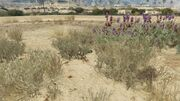 PeyotePlants-GTAO-Location56