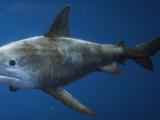 Sharks (animal)