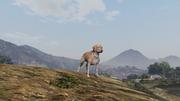 Peyote Plants Animals GTAVe Labrador