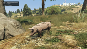 Peyote Plants Animals GTAVe Pig