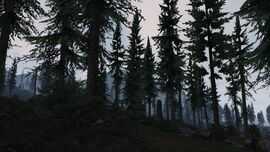 PaletoForest-GTAV-morning