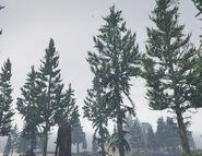 PineTree-GTAV-PaletoForest