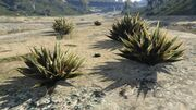 PeyotePlants-GTAO-Location28