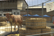 Director Mode Actors GTAVpc Animals Cow