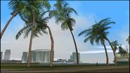 PalmTrees-GTAVC-Tall