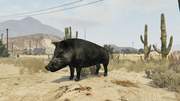 Peyote Plants Animals GTAVe Boar