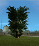 Tree-GTAVC-3