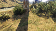 PeyotePlants-GTAO-Location68