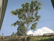 EucalyptusTree-GTAV-SS1
