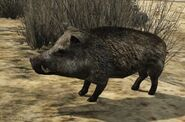 Gta5wildboar