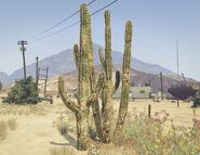 Cactus-GTAV