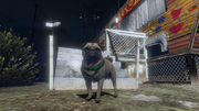 Peyote Plants Animals GTAVe Pug