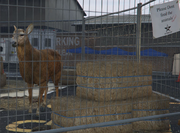 Director Mode Actors GTAVpc Animals Deer