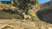 Peyote Plants Animals GTAVe Husky